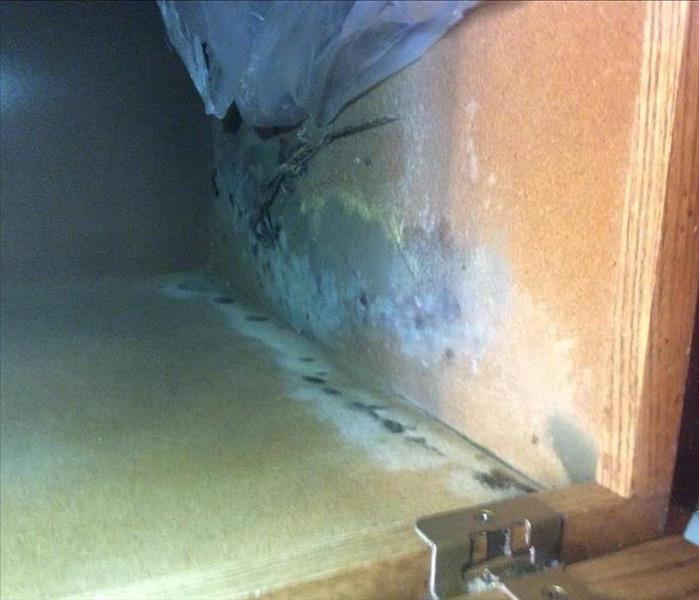 Mold Remediation A Brief Overview of the Mold Remediation Process